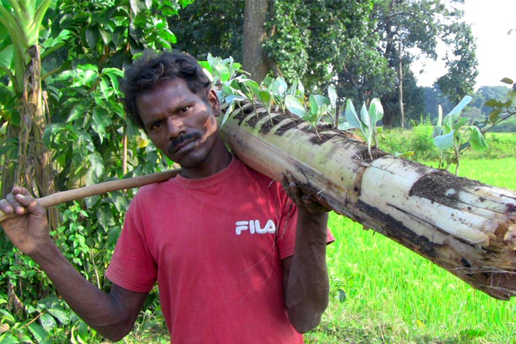 Caritas India Banana trunk
