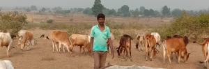 Cattle based Integrated Farming System (IFS) enabled smallholders to secure their Farm Production & Income
